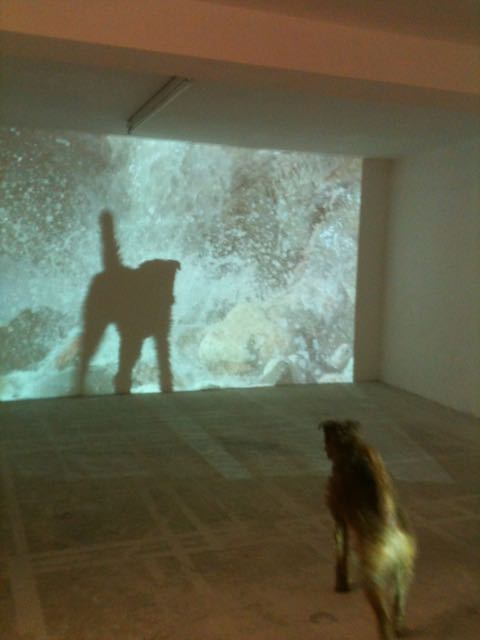 Ulf in front of the installation of she wonders/wanders film casting a shadow onto the screen