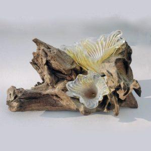 ..Staghorn Fungus Sculpture on Bogwood